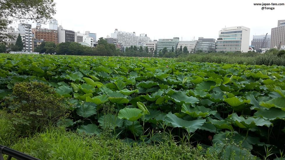 shinobazu-pond-bentendo-13-26-07-2016