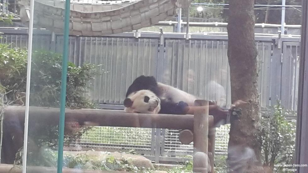 ueno-zoo-08-26-07-2016