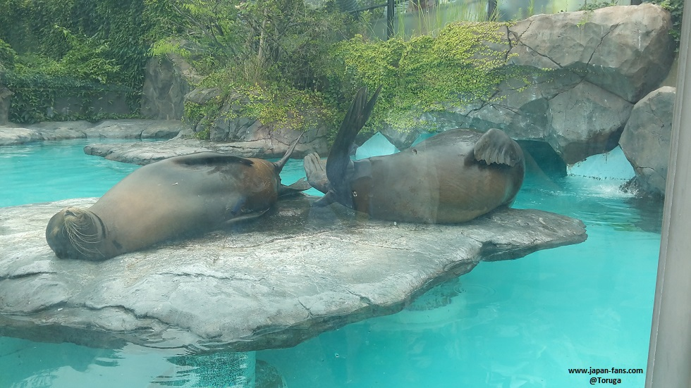 ueno-zoo-21-26-07-2016