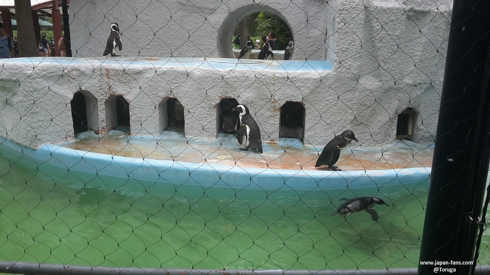 ueno-zoo-49-26-07-2016