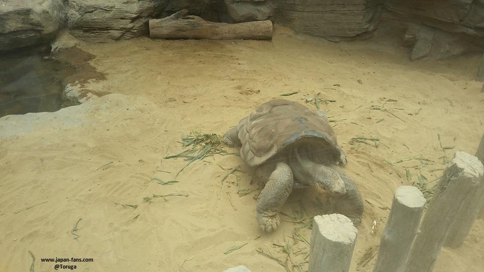 ueno-zoo-78-26-07-2016