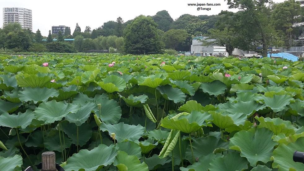 shinobazu-pond-bentendo-02-26-07-2016
