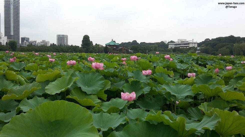 shinobazu-pond-bentendo-15-26-07-2016