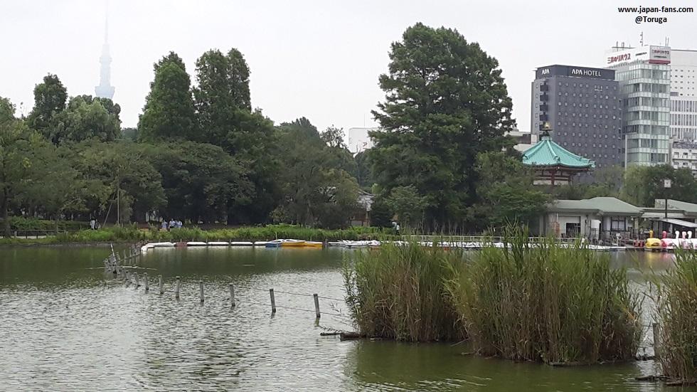 shinobazu-pond-bentendo-24-26-07-2016