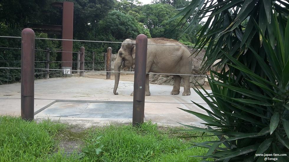 ueno-zoo-16-26-07-2016